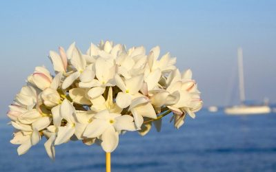 La biznaga: la flor de Málaga